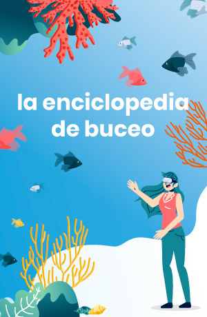 Enciclopedia de buceo Divers Go Diving