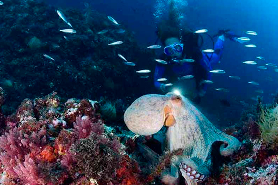 Buceo-Aqualia-La-Herradura-1