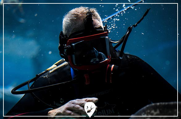 buceo-profesional-divers-go-diving