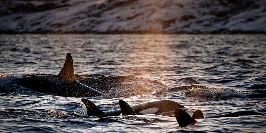 cetaceos-cautiverio