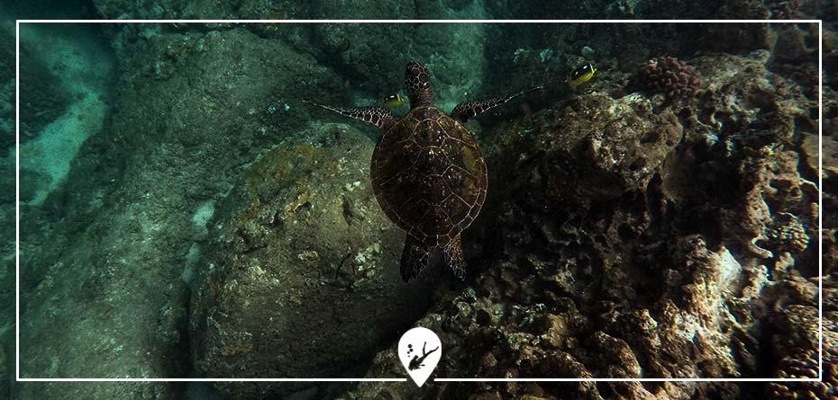 proteccion-oceano-tortugas