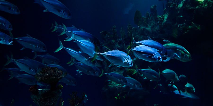 simbiosis-en-el-mar