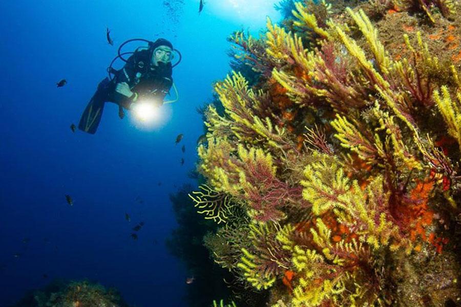Stollis-Divebase