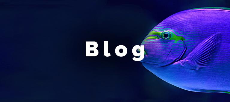 Blog Divers go diving