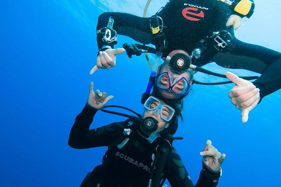Albatros diving