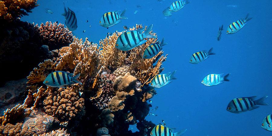peces-buceo-espana
