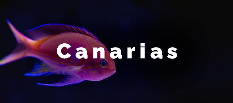 obre canariasa divers go canarias